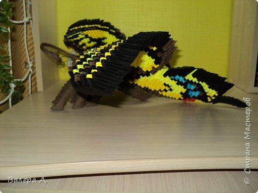 Бабочка махаон. фото 3