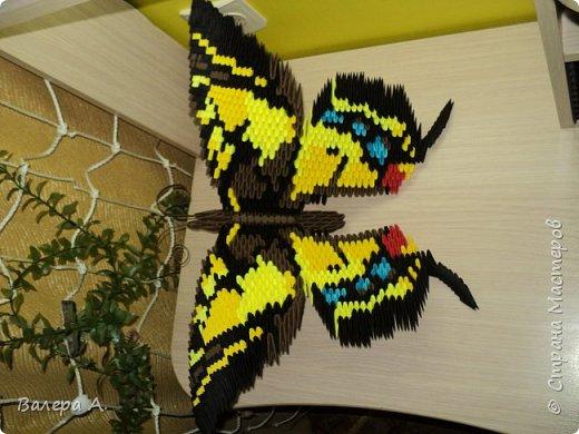Бабочка махаон. фото 4