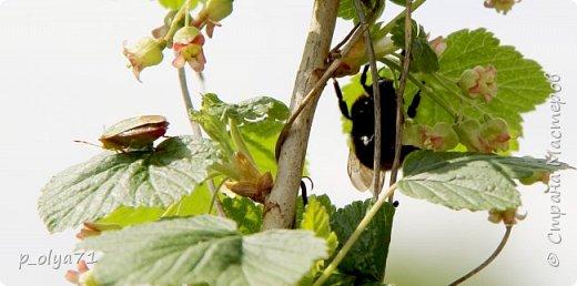 Здравствуйте!!!! У нас потеплело)) Сегодня - так вообще жара))) Вчера на дорожке около дома мне попался майский жук) сходила домой за фотиком,нафоткала не только жука)) Фото 23.05.17 фото 12