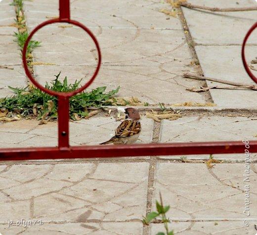 Здравствуйте!!!! У нас потеплело)) Сегодня - так вообще жара))) Вчера на дорожке около дома мне попался майский жук) сходила домой за фотиком,нафоткала не только жука)) Фото 23.05.17 фото 27