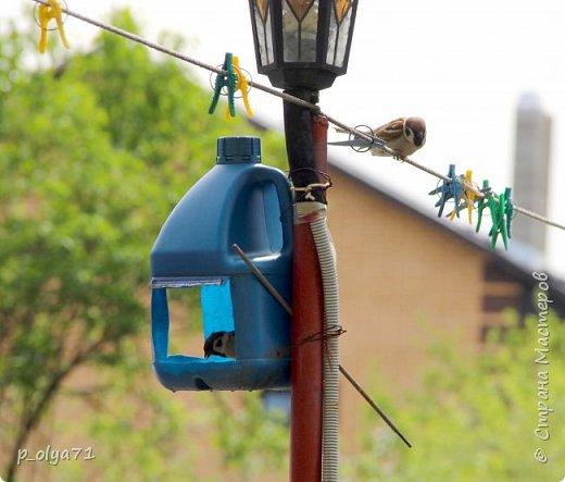 Здравствуйте!!!! У нас потеплело)) Сегодня - так вообще жара))) Вчера на дорожке около дома мне попался майский жук) сходила домой за фотиком,нафоткала не только жука)) Фото 23.05.17 фото 18