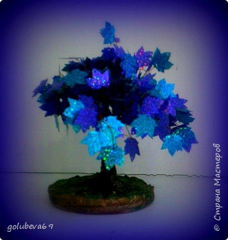 Синий клён. фото 9