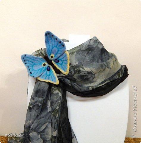 голубой мотылек фото 2