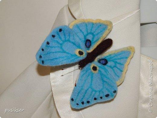 голубой мотылек фото 1