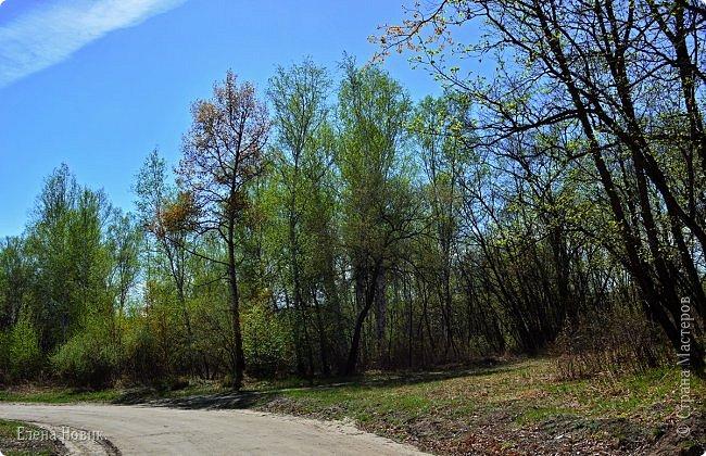 Приглашаю жителей Страны Мастеров на прогулку в лес. День солнечный, настроение замечательное, складываем в рюкзак необходимый минимум для загородной прогулки и в путь. фото 1