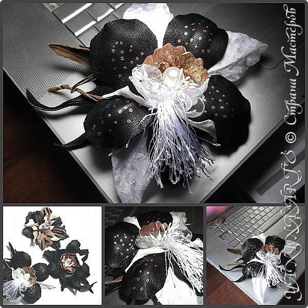 Две чёрные орхидеи родились за одну ночь! фото 1