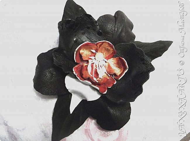 Две чёрные орхидеи родились за одну ночь! фото 7