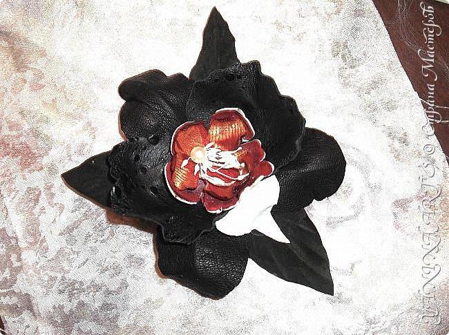Две чёрные орхидеи родились за одну ночь! фото 8