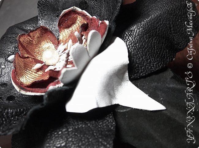 Две чёрные орхидеи родились за одну ночь! фото 10