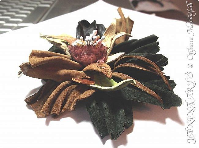 Две чёрные орхидеи родились за одну ночь! фото 14