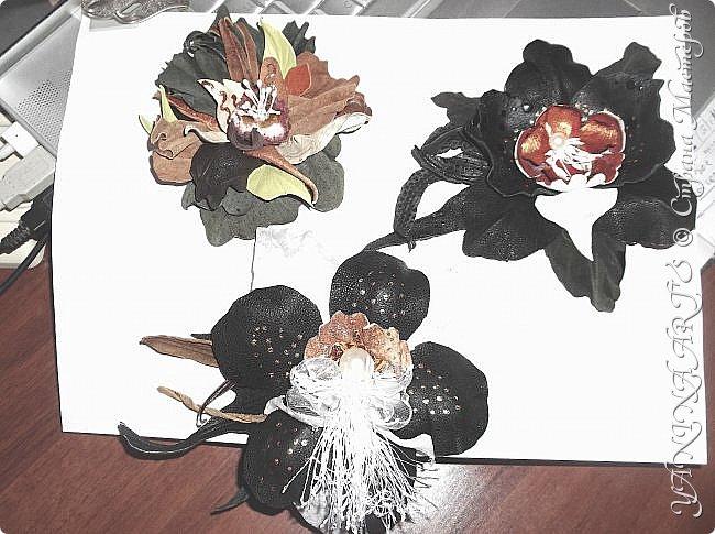 Две чёрные орхидеи родились за одну ночь! фото 11