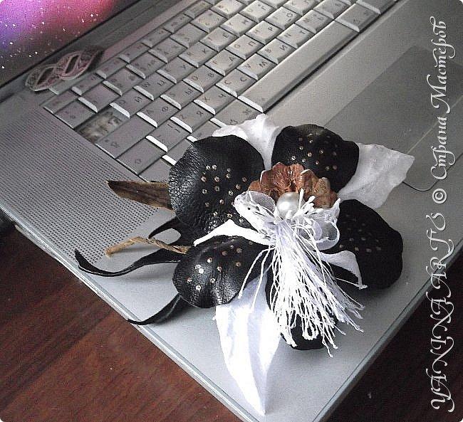 Две чёрные орхидеи родились за одну ночь! фото 6