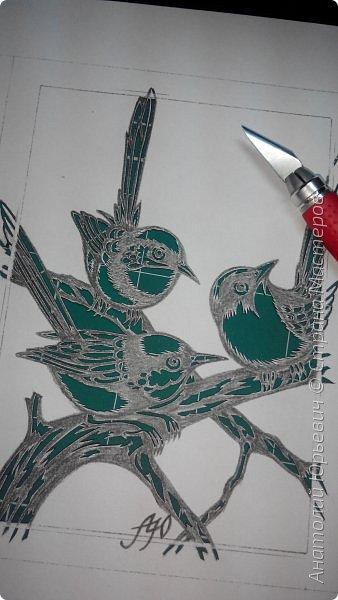 """Всем доброго времени суток! Вашему вниманию новая открытка с птичками. - Блестящий расписной малюр (лат. Malurus splendens) — птица из семейства малюровых. Встречается на большей части Австралии от центральной части западного Нового Южного Уэльса до юго-запада Квинсленда по всему побережью Западной Австралии. - Среда обитания птицы простирается от леса, до пустынных кустов обычно с достаточным количеством растительных укрытий. Питается, в основном, насекомыми и семенами. - Эскиз для """"вырезалки"""" выполнен, изменён и доработан по цветной работе австралийского художника анималиста Eric shepherd. (В оригинале - четыре птички, у меня - три, четвёртая """"физически"""" не влезла)) - Размер открытки 12х16см. фото 3"""