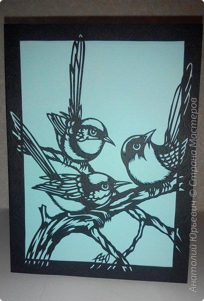 """Всем доброго времени суток! Вашему вниманию новая открытка с птичками. - Блестящий расписной малюр (лат. Malurus splendens) — птица из семейства малюровых. Встречается на большей части Австралии от центральной части западного Нового Южного Уэльса до юго-запада Квинсленда по всему побережью Западной Австралии. - Среда обитания птицы простирается от леса, до пустынных кустов обычно с достаточным количеством растительных укрытий. Питается, в основном, насекомыми и семенами. - Эскиз для """"вырезалки"""" выполнен, изменён и доработан по цветной работе австралийского художника анималиста Eric shepherd. (В оригинале - четыре птички, у меня - три, четвёртая """"физически"""" не влезла)) - Размер открытки 12х16см. фото 1"""