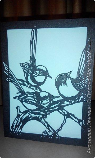 """Всем доброго времени суток! Вашему вниманию новая открытка с птичками. - Блестящий расписной малюр (лат. Malurus splendens) — птица из семейства малюровых. Встречается на большей части Австралии от центральной части западного Нового Южного Уэльса до юго-запада Квинсленда по всему побережью Западной Австралии. - Среда обитания птицы простирается от леса, до пустынных кустов обычно с достаточным количеством растительных укрытий. Питается, в основном, насекомыми и семенами. - Эскиз для """"вырезалки"""" выполнен, изменён и доработан по цветной работе австралийского художника анималиста Eric shepherd. (В оригинале - четыре птички, у меня - три, четвёртая """"физически"""" не влезла)) - Размер открытки 12х16см. фото 13"""