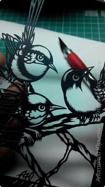 """Всем доброго времени суток! Вашему вниманию новая открытка с птичками. - Блестящий расписной малюр (лат. Malurus splendens) — птица из семейства малюровых. Встречается на большей части Австралии от центральной части западного Нового Южного Уэльса до юго-запада Квинсленда по всему побережью Западной Австралии. - Среда обитания птицы простирается от леса, до пустынных кустов обычно с достаточным количеством растительных укрытий. Питается, в основном, насекомыми и семенами. - Эскиз для """"вырезалки"""" выполнен, изменён и доработан по цветной работе австралийского художника анималиста Eric shepherd. (В оригинале - четыре птички, у меня - три, четвёртая """"физически"""" не влезла)) - Размер открытки 12х16см. фото 6"""
