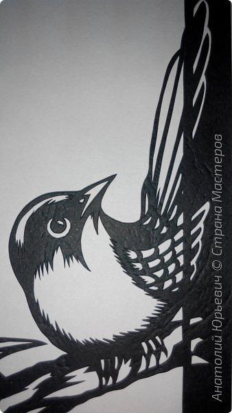 """Всем доброго времени суток! Вашему вниманию новая открытка с птичками. - Блестящий расписной малюр (лат. Malurus splendens) — птица из семейства малюровых. Встречается на большей части Австралии от центральной части западного Нового Южного Уэльса до юго-запада Квинсленда по всему побережью Западной Австралии. - Среда обитания птицы простирается от леса, до пустынных кустов обычно с достаточным количеством растительных укрытий. Питается, в основном, насекомыми и семенами. - Эскиз для """"вырезалки"""" выполнен, изменён и доработан по цветной работе австралийского художника анималиста Eric shepherd. (В оригинале - четыре птички, у меня - три, четвёртая """"физически"""" не влезла)) - Размер открытки 12х16см. фото 8"""