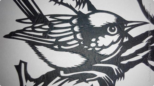 """Всем доброго времени суток! Вашему вниманию новая открытка с птичками. - Блестящий расписной малюр (лат. Malurus splendens) — птица из семейства малюровых. Встречается на большей части Австралии от центральной части западного Нового Южного Уэльса до юго-запада Квинсленда по всему побережью Западной Австралии. - Среда обитания птицы простирается от леса, до пустынных кустов обычно с достаточным количеством растительных укрытий. Питается, в основном, насекомыми и семенами. - Эскиз для """"вырезалки"""" выполнен, изменён и доработан по цветной работе австралийского художника анималиста Eric shepherd. (В оригинале - четыре птички, у меня - три, четвёртая """"физически"""" не влезла)) - Размер открытки 12х16см. фото 9"""