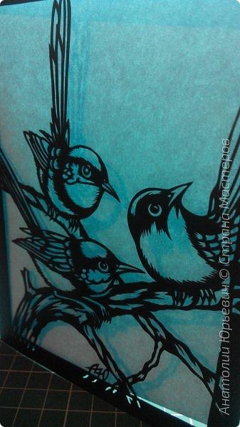 """Всем доброго времени суток! Вашему вниманию новая открытка с птичками. - Блестящий расписной малюр (лат. Malurus splendens) — птица из семейства малюровых. Встречается на большей части Австралии от центральной части западного Нового Южного Уэльса до юго-запада Квинсленда по всему побережью Западной Австралии. - Среда обитания птицы простирается от леса, до пустынных кустов обычно с достаточным количеством растительных укрытий. Питается, в основном, насекомыми и семенами. - Эскиз для """"вырезалки"""" выполнен, изменён и доработан по цветной работе австралийского художника анималиста Eric shepherd. (В оригинале - четыре птички, у меня - три, четвёртая """"физически"""" не влезла)) - Размер открытки 12х16см. фото 12"""