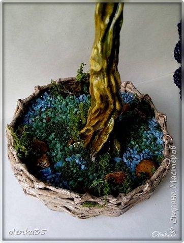 Виноградное дерево фото 5