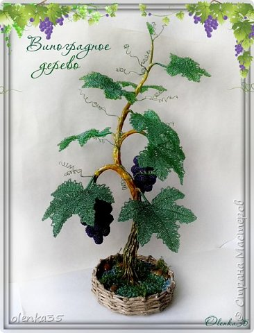 Виноградное дерево фото 1