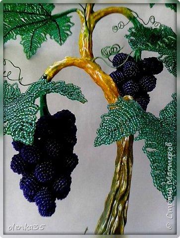 Виноградное дерево фото 2