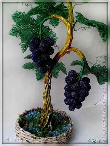 Виноградное дерево фото 3