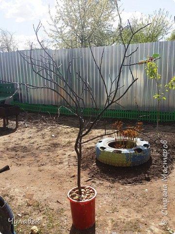 Дерево для украшения сада из пластиковых бутылок фото 5