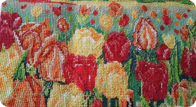 Тюльпанный луг фото 3