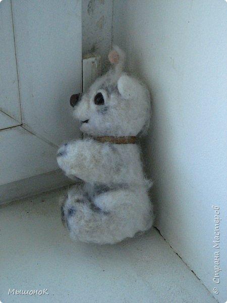 У меня дома теперь живет пушистая компашка!) Белый мишка, чихуахуа и хаски! Родились они на свет вчера, и потому быстро подружились)      фото 3