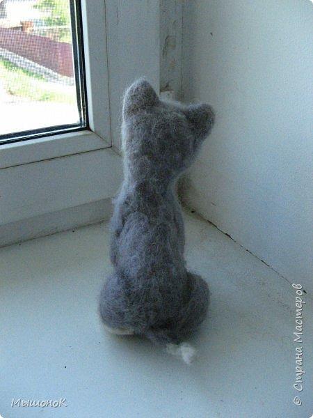 У меня дома теперь живет пушистая компашка!) Белый мишка, чихуахуа и хаски! Родились они на свет вчера, и потому быстро подружились)      фото 6