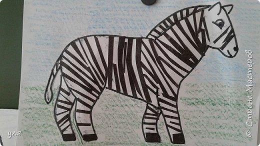 зебра  фото 1