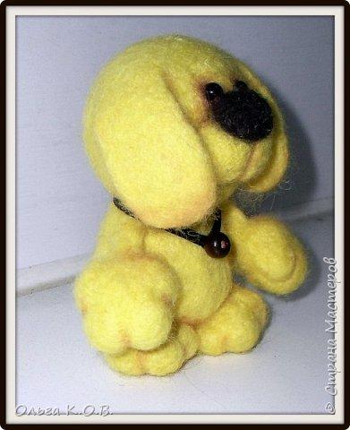 Желтый песик фото 5