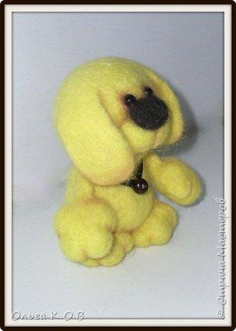 Желтый песик фото 7