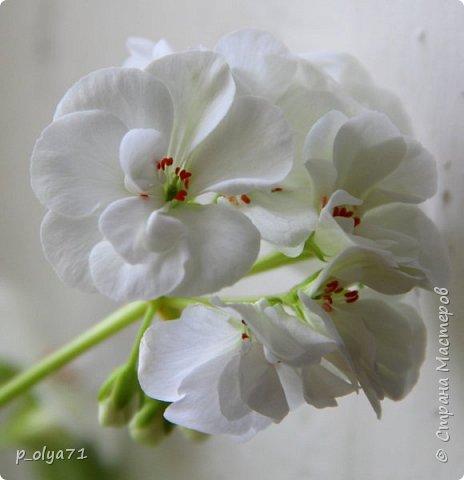 Здравствуйте!!! Очень рада всех видеть!!! В очередной раз хочу поделиться с вами красотой,которую дарит нам природа! фото 9