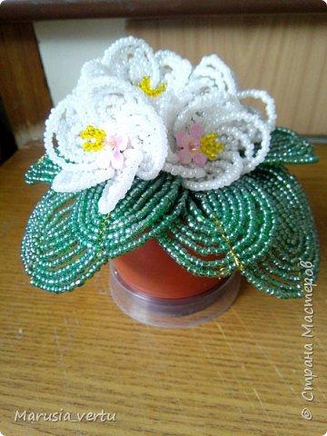 Мой первый цветочек из бисера с ароматом кофе (гипс я размешивала сильно-концентрированным раствором холодного кофе, вместо воды). фото 2