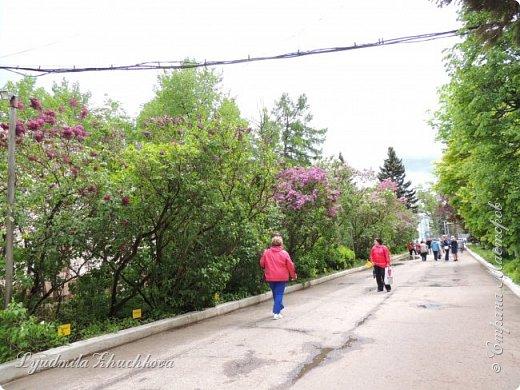 Приглашаю всех полюбоваться цветением сирени на празднике в нашем городе фото 49