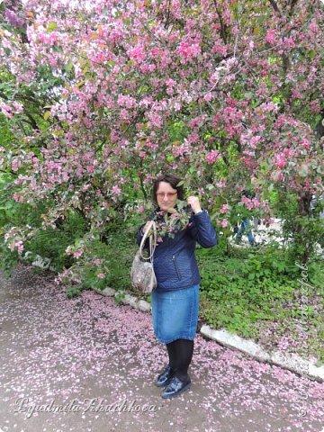 Приглашаю всех полюбоваться цветением сирени на празднике в нашем городе фото 19
