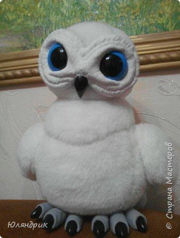 Белая полярная Сова фото 1
