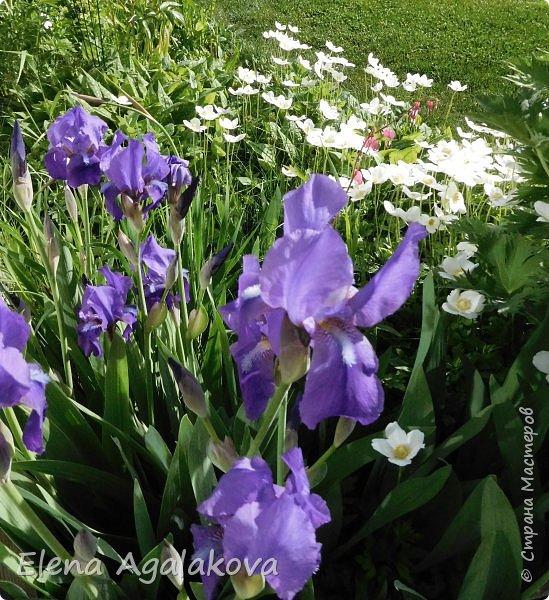 """Лето продолжает радовать солнышком и цветами. Моя новая мандала  """" Цветок"""" фото 8"""