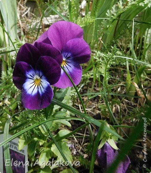 """Лето продолжает радовать солнышком и цветами. Моя новая мандала  """" Цветок"""" фото 4"""