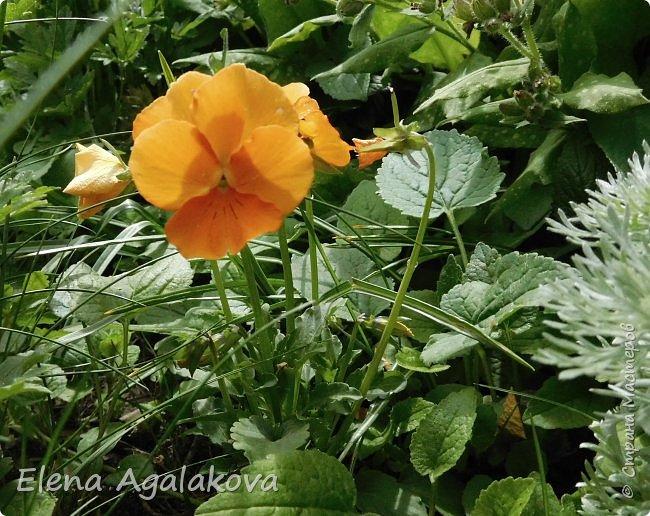 """Лето продолжает радовать солнышком и цветами. Моя новая мандала  """" Цветок"""" фото 9"""
