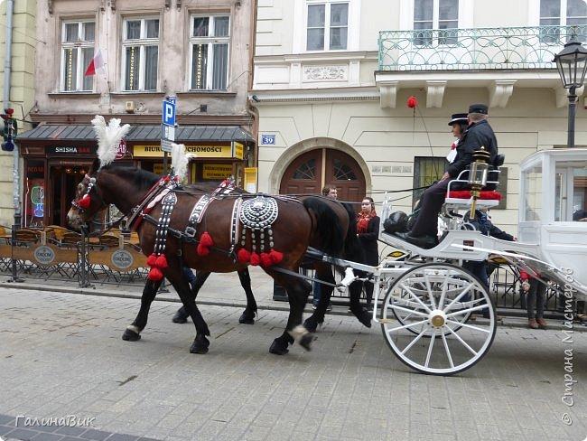Путешествовать по Польше мы начали в южном направлении: Варшава, Ченстохова, Краков, Величка. фото 64