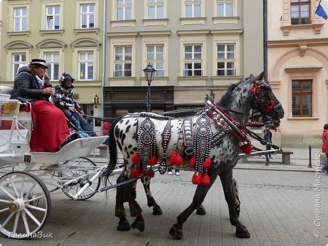 Путешествовать по Польше мы начали в южном направлении: Варшава, Ченстохова, Краков, Величка. фото 63