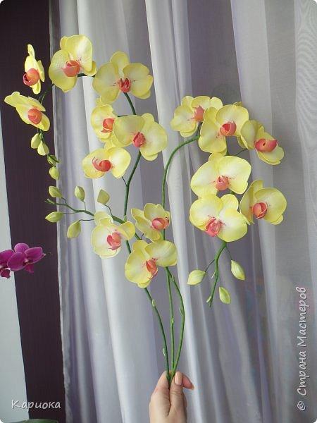 Доброго времени суток СМ! И снова у меня орхидея! На этот раз желто-лимонная. фото 8