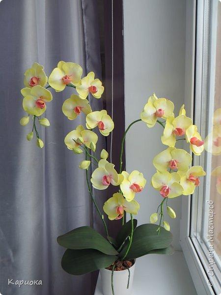 Доброго времени суток СМ! И снова у меня орхидея! На этот раз желто-лимонная. фото 1