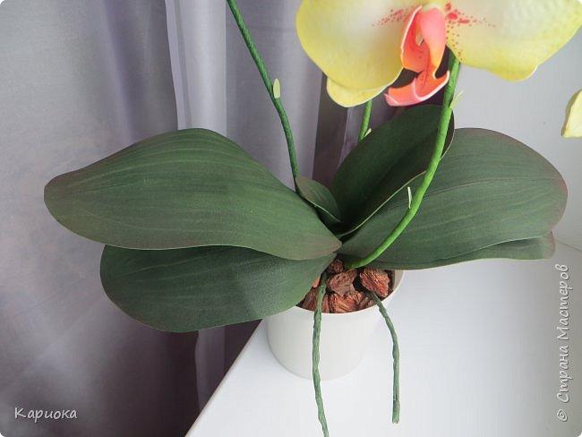 Доброго времени суток СМ! И снова у меня орхидея! На этот раз желто-лимонная. фото 3