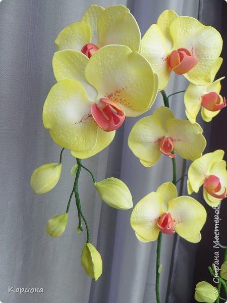 Доброго времени суток СМ! И снова у меня орхидея! На этот раз желто-лимонная. фото 4