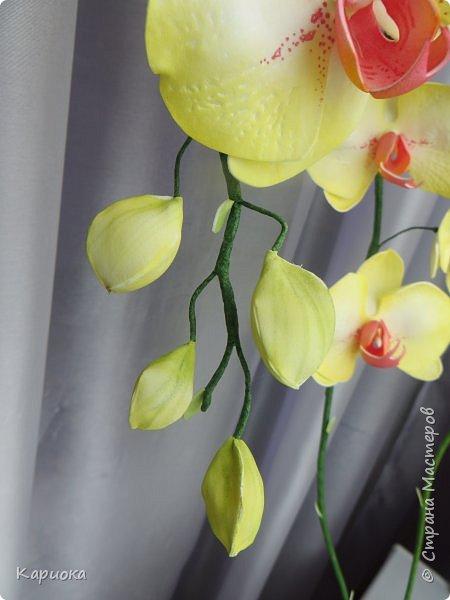 Доброго времени суток СМ! И снова у меня орхидея! На этот раз желто-лимонная. фото 5