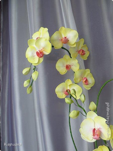 Доброго времени суток СМ! И снова у меня орхидея! На этот раз желто-лимонная. фото 6